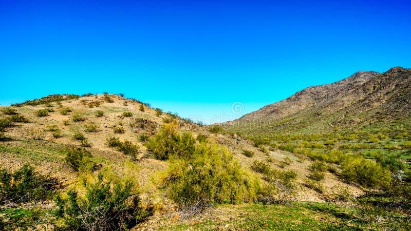 Abandonnez le paysage avec des cactus de Saguaro le long de la traînée nationale près du San Juan Trail Head dans les montagnes d photographie stock