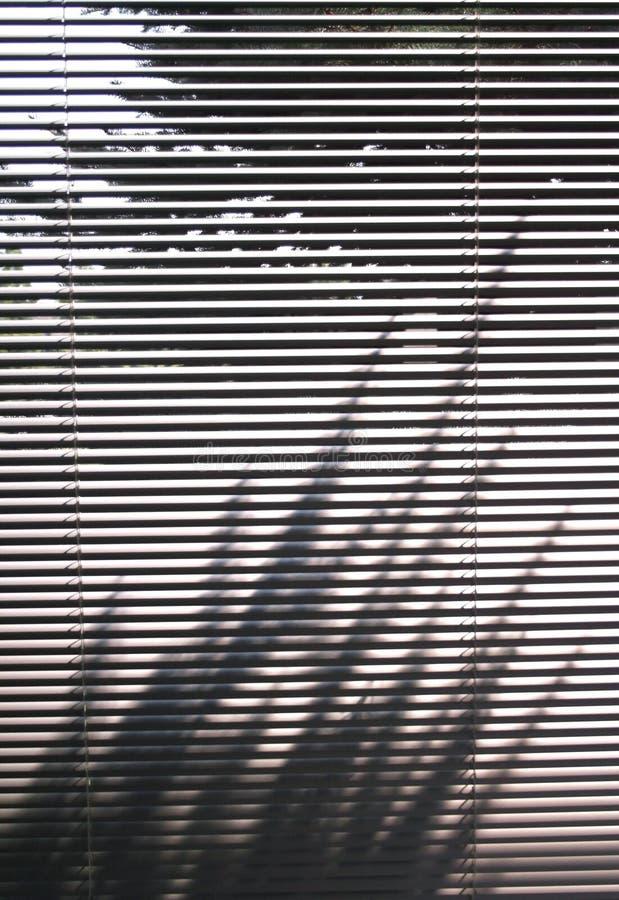 Abat-jour et ombre d'arbre image stock