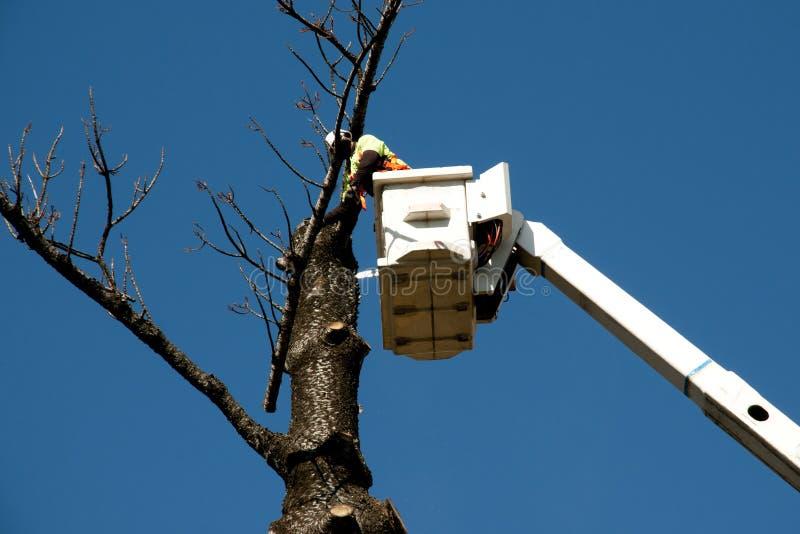 Abattage d'arbres photos stock