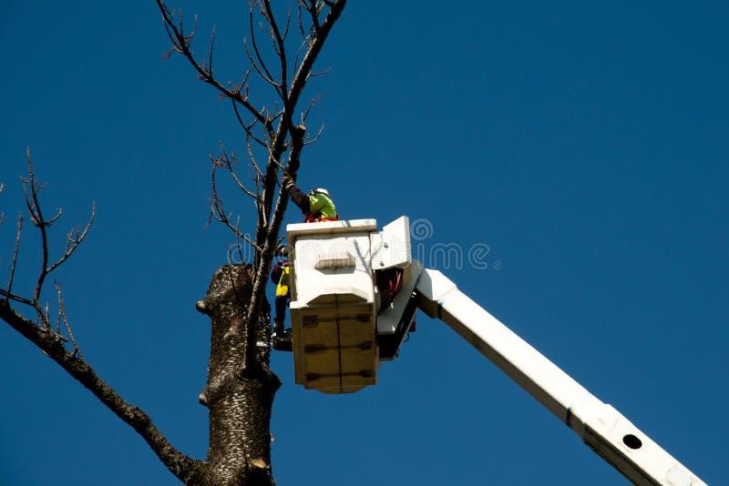Abattage d'arbres images libres de droits