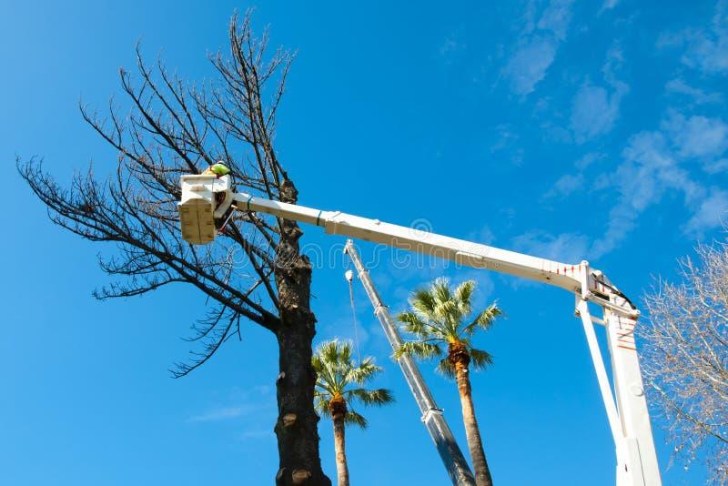 Abattage d'arbres photo stock