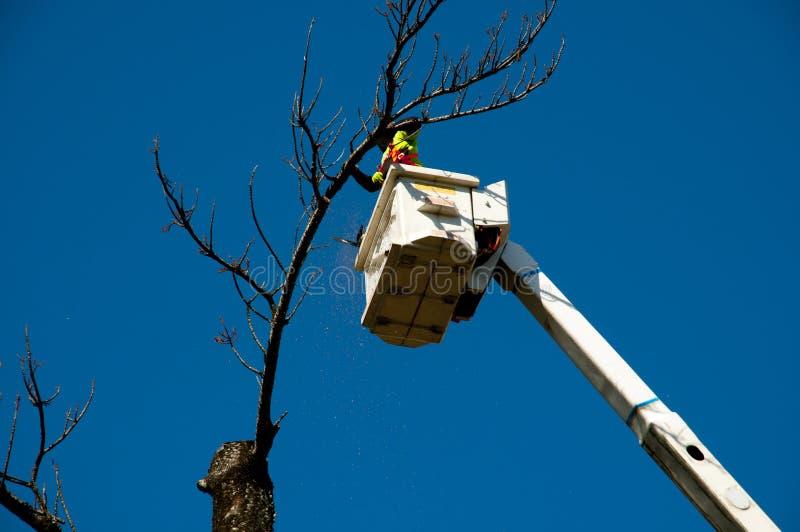 Abattage d'arbres image libre de droits
