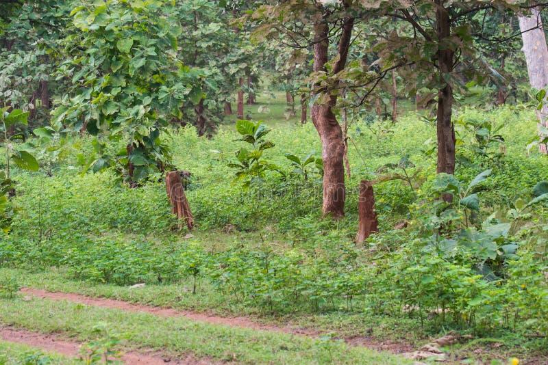 Abattage d'arbres de déboisement photo libre de droits