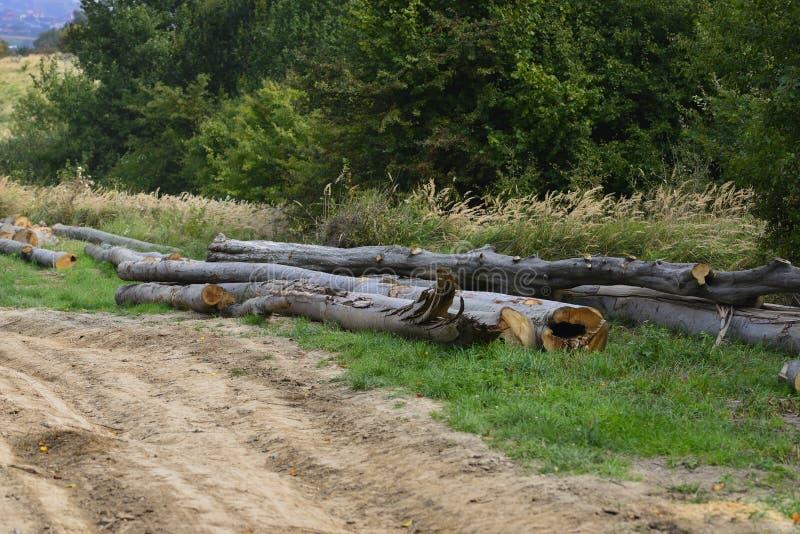 Abattage des forêts vivantes de hêtre dans les Carpathiens ukrainiens image libre de droits