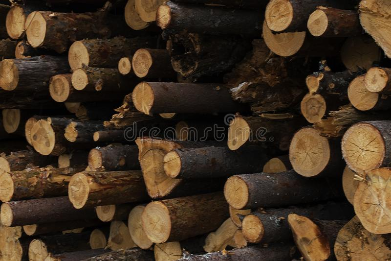 Abattage illégal des arbres dans le concept d'écologie de forêt image libre de droits