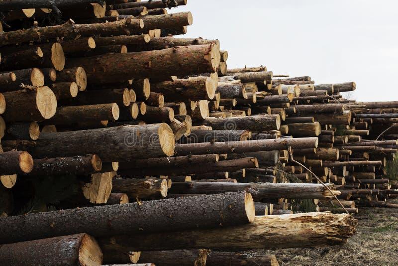 Abattage illégal des arbres dans le concept d'écologie de forêt images libres de droits