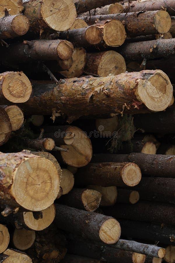Abattage illégal des arbres dans le concept d'écologie de forêt photo stock