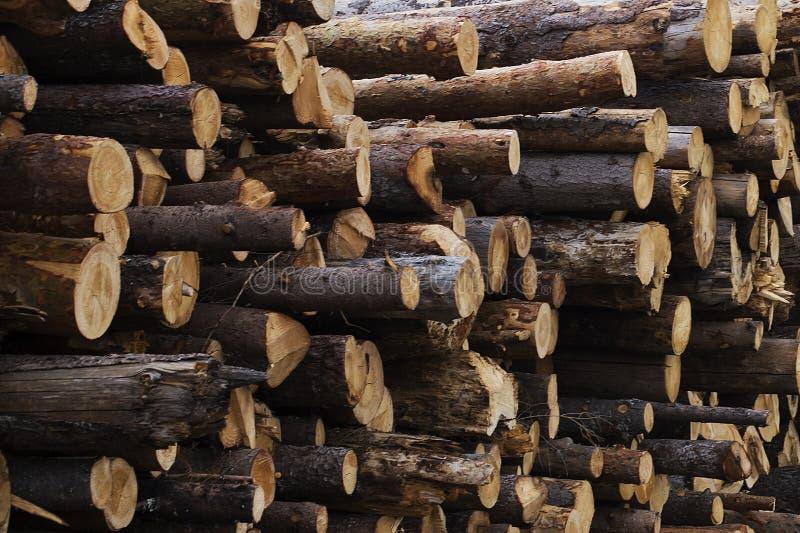Abattage illégal des arbres dans le concept d'écologie de forêt photographie stock