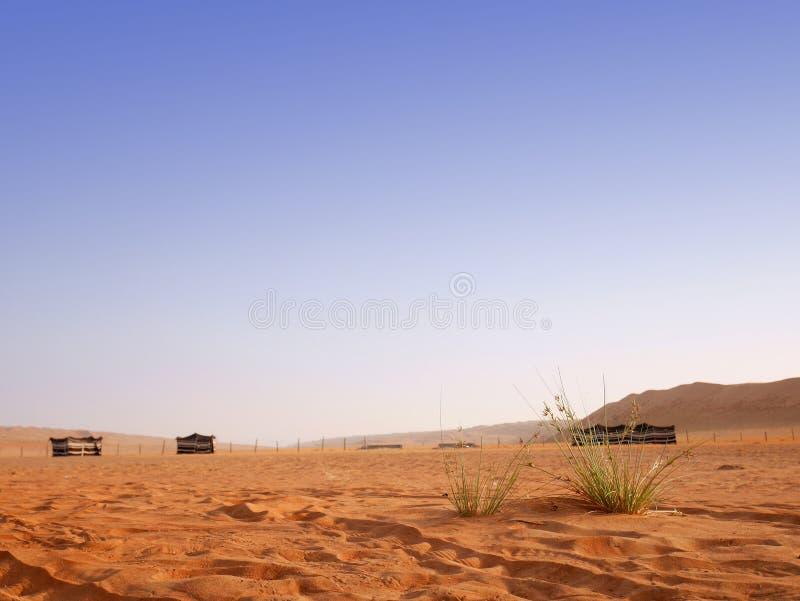 Abbandoni il campo al deserto di Wahiba, Oman fotografia stock libera da diritti