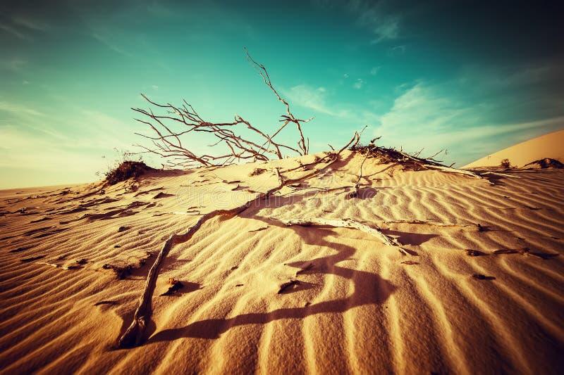 Abbandoni il paesaggio con le piante morte in dune di sabbia sotto il cielo soleggiato fotografia stock