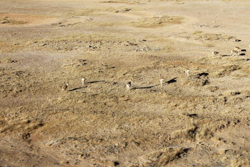 Abbandoni la natura selvaggia del deserto della sabbia e la siccità all'aperto della pianta verde dell'erba in materiale di fotog immagine stock libera da diritti