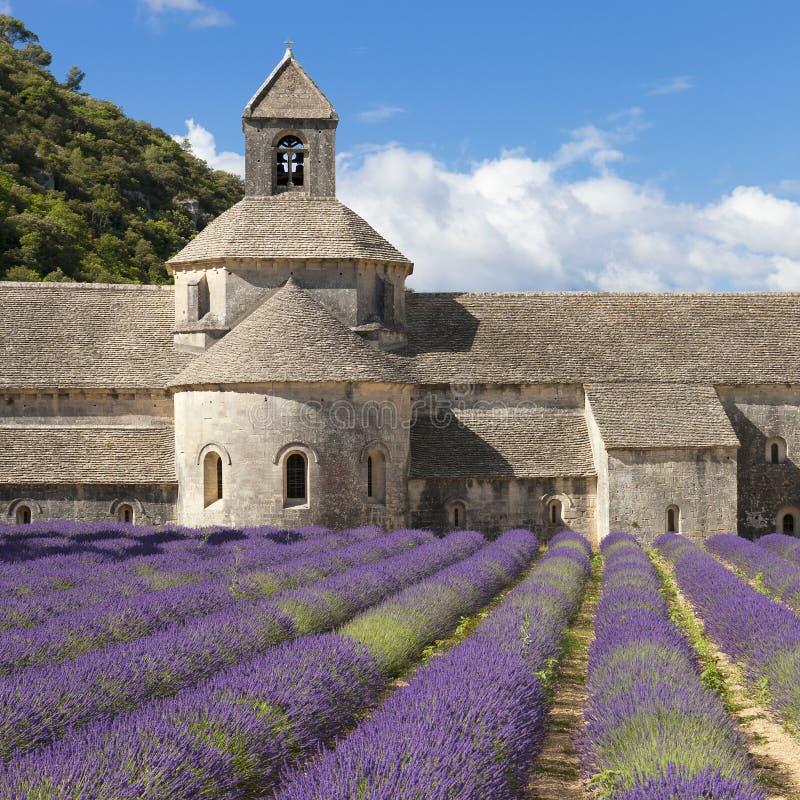 Abbaye de Senanque et de champ de lavander image stock