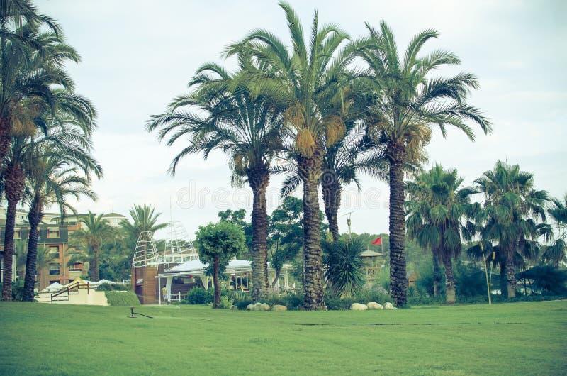 Abbellimento tropicale con la piantatura e le palme fotografia stock