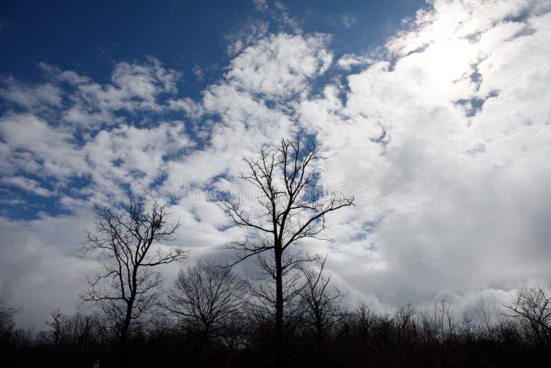 Abbellisca con bella nebbia in foresta sulla collina o trascini attraverso una foresta misteriosa dell'inverno con le foglie di a immagine stock libera da diritti