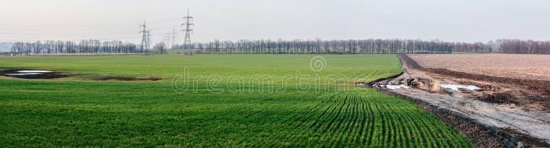 Abbellisca con i giacimenti agricoli della segale del frumento autunnale e la strada sporca -- paesaggio della molla, panorama immagine stock libera da diritti