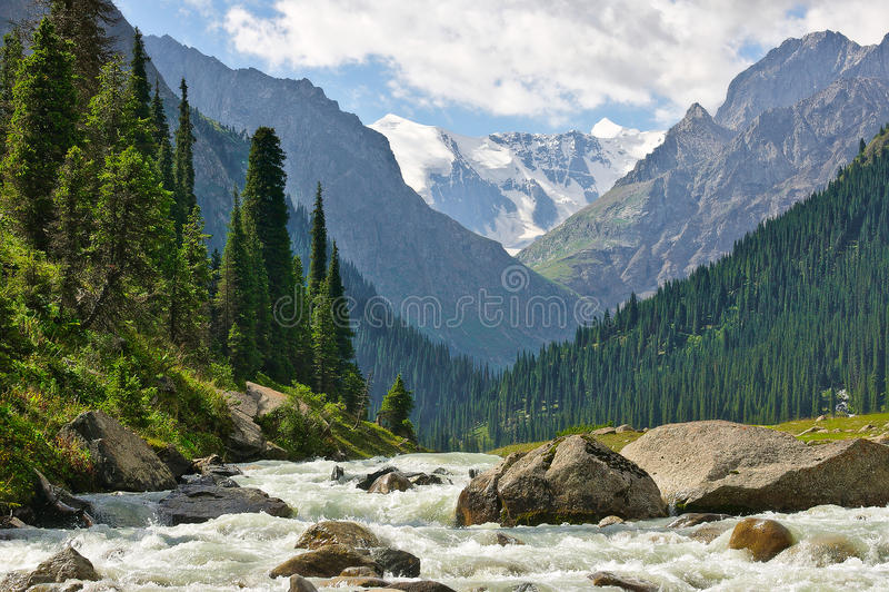 Abbellisca con il fiume della montagna che attraversa la foresta dell'abete con i picchi della neve nei precedenti immagine stock libera da diritti