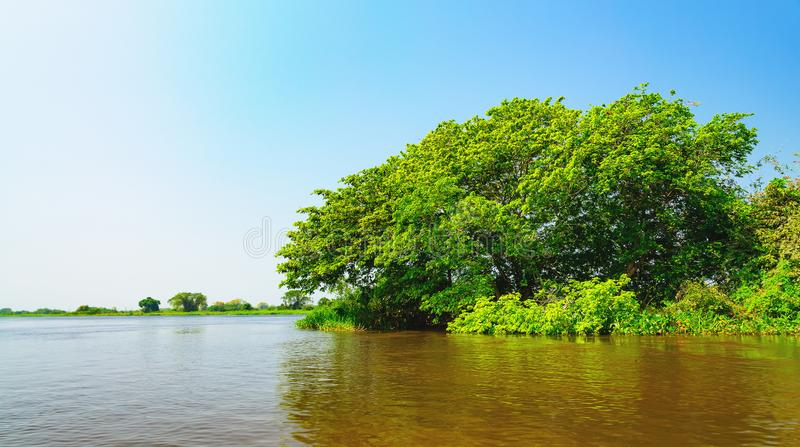Abbellisca con il fiume e la vegetazione verde degli alberi e pianti fotografia stock libera da diritti
