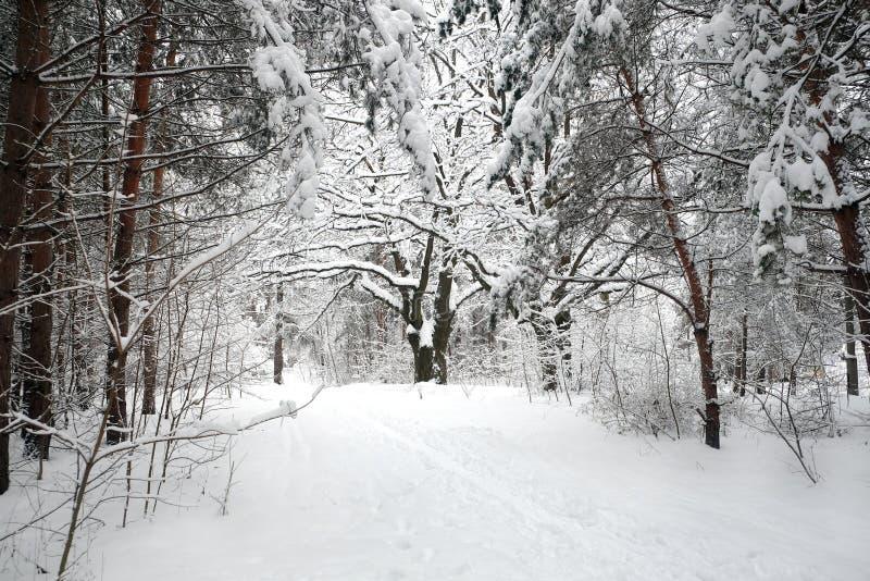 Abbellisca con il percorso innevato sull'orlo della foresta e del fiume congelato su un paesaggio dayBeautiful dell'inverno nuvol fotografia stock