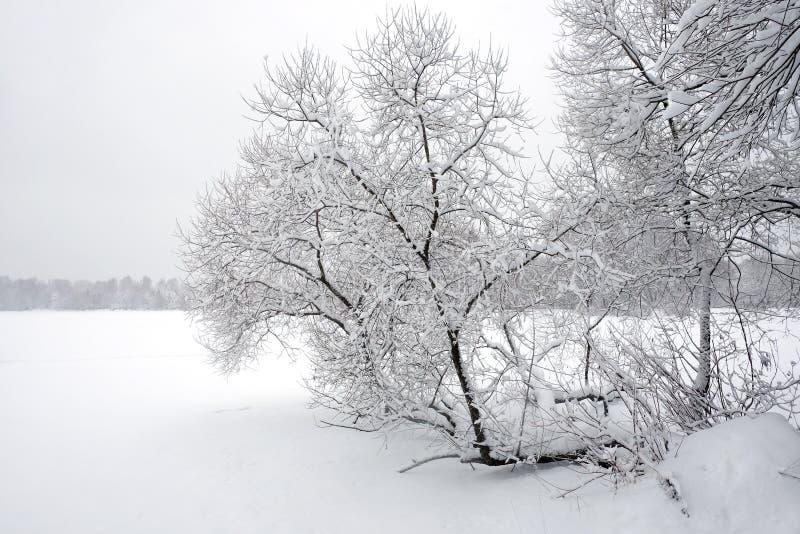 Abbellisca con il percorso innevato sull'orlo della foresta e del fiume congelato un giorno di inverno nuvoloso immagini stock libere da diritti