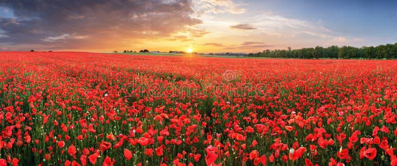 Abbellisca con il tramonto piacevole sopra il campo del papavero - panorama immagine stock