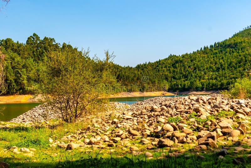 Abbellisca con la foresta, il fiume e le pietre rotonde sotto il sole luminoso fotografia stock