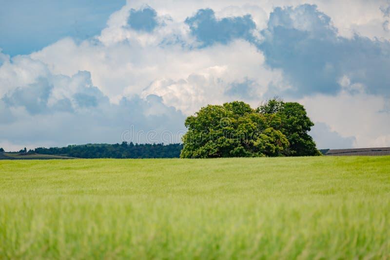 Abbellisca di estate con il sole luminoso, i prati ed il campo di mais dorato nei precedenti immagine stock