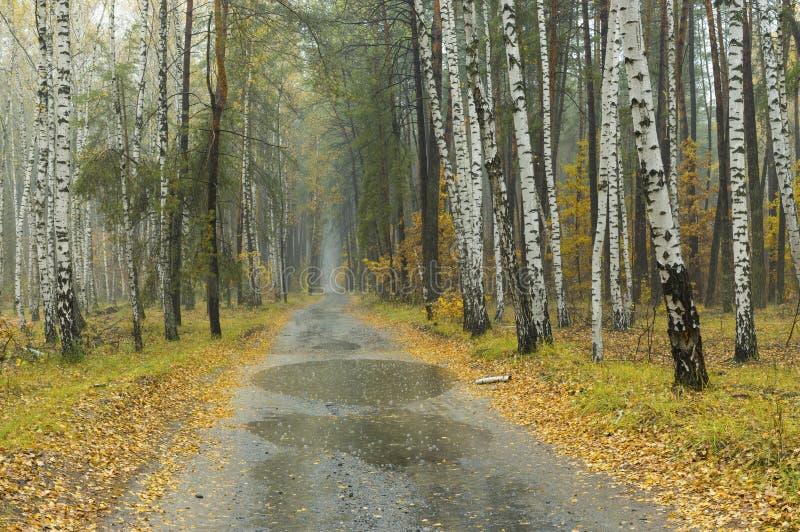 Abbellisca a foschia ed a tempo piovoso in foresta mista fotografie stock libere da diritti