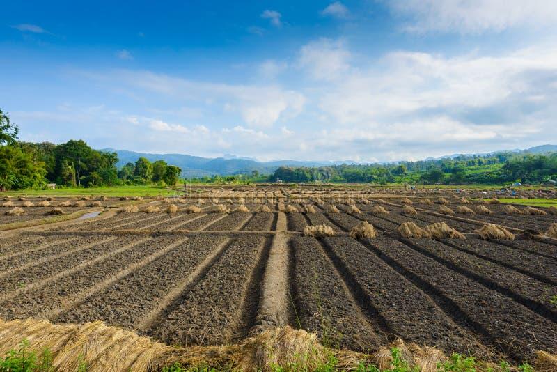 Abbellisca il punto di vista di una verdura di recente crescente dell'agricoltura immagine stock