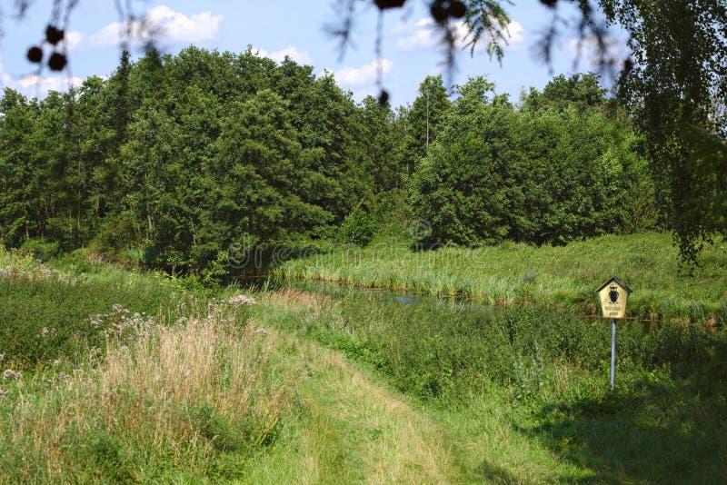 Abbellisca l'area Unteres Peenetal (Vorpommern-Greifswald) di conservazione, a sud di Greifswald, la Germania fotografia stock
