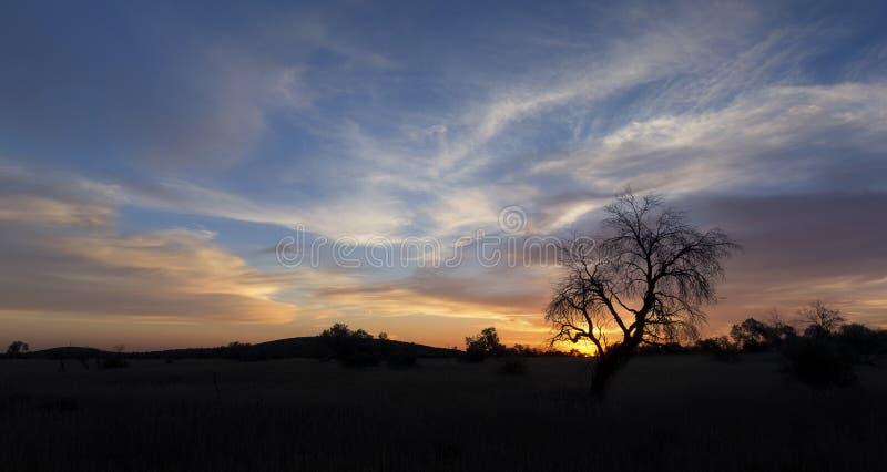 Abbellisca la foto di un albero morto della siluetta al tramonto con la SK blu immagine stock libera da diritti