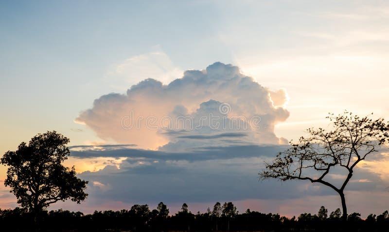 Abbellisca la vista del tramonto dietro la grande nuvola con l'albero a foregroun immagine stock