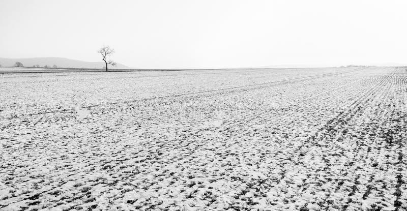 Abbellisca la vista di panorama con un campo dell'agricoltura nell'inverno fotografia stock