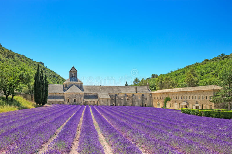 Abbey of Senanque blooming lavender flowers. Gordes, Luberon, Pr. Abbey of Senanque and blooming rows lavender flowers. Gordes, Luberon, Vaucluse, Provence royalty free stock photos
