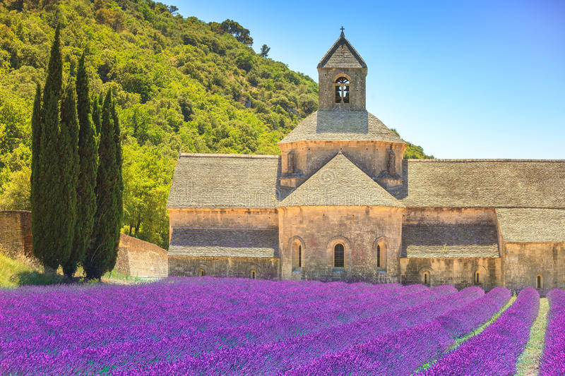 Abbey of Senanque blooming lavender flowers. Gordes, Luberon, Pr. Abbey of Senanque and blooming rows lavender flowers. Gordes, Luberon, Vaucluse, Provence stock photography
