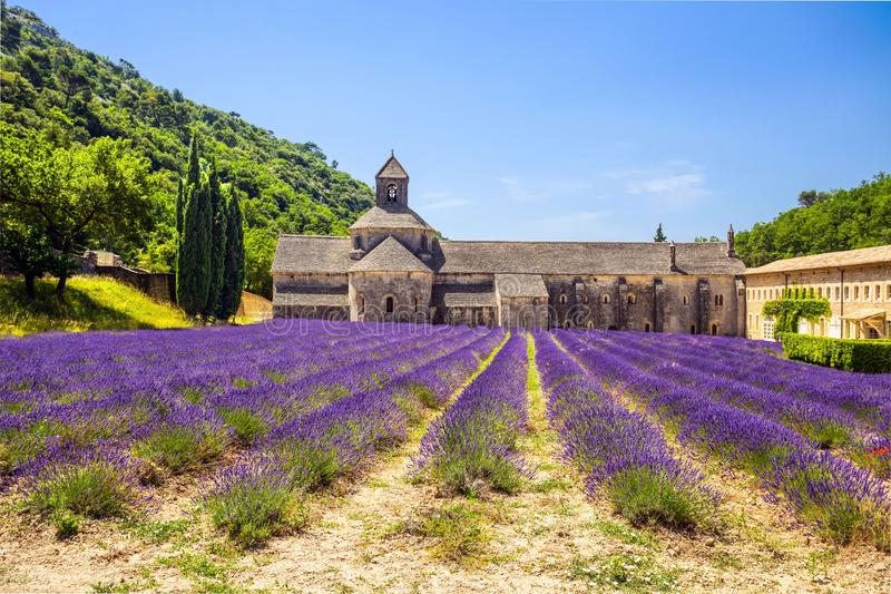 Abbey of Senanque and blooming rows lavender flowers. Gordes, Luberon, Vaucluse, Provence, France. Abbey of Senanque and blooming rows lavender flowers. Gordes stock photos