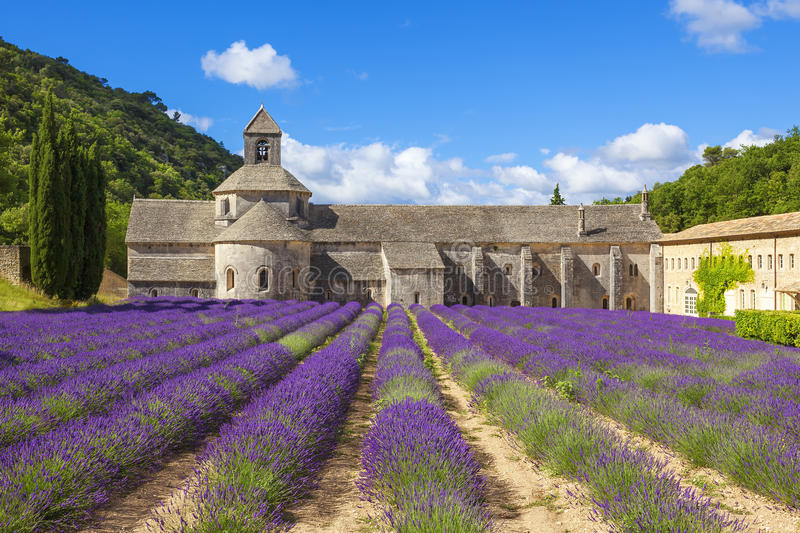Abbey of Senanque. And blooming rows lavender flowers. Gordes, Luberon, Vaucluse, Provence, France, Europe royalty free stock photo