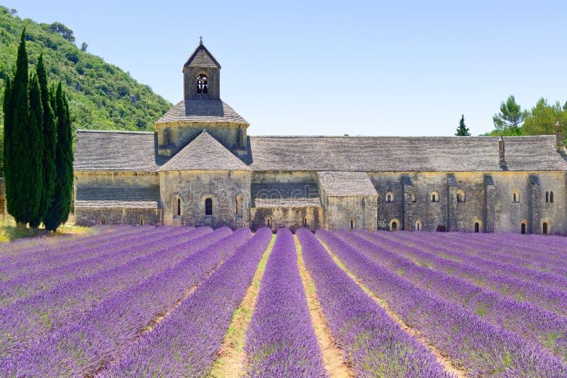 Abbey of Senanque and lavender. Provence, Franc. Abbey of Senanque and blooming rows lavender flowers. Gordes, Luberon, Vaucluse, Provence, France, Europe stock photos