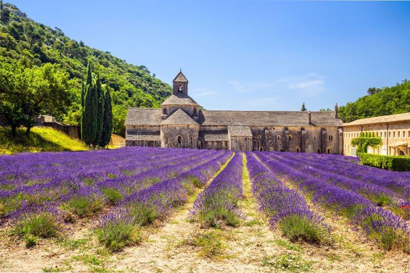 abbeyen som blommar Europa, blommar för provence för luberon för france gordeslavendel senanque vaucluse rader Gordes Luberon, Va arkivfoton