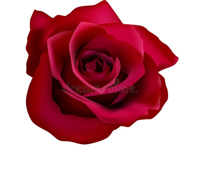 Abbildung der roten Rosen (mit Ineinander greifen) stock abbildung