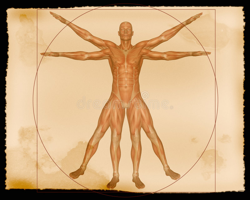 Abbildung - Muskel-Mann stockbild