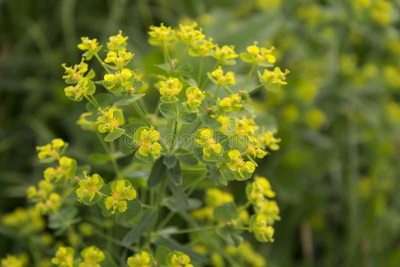 Download Abbondanza di giallo fotografia stock. Immagine di mattina - 117975264