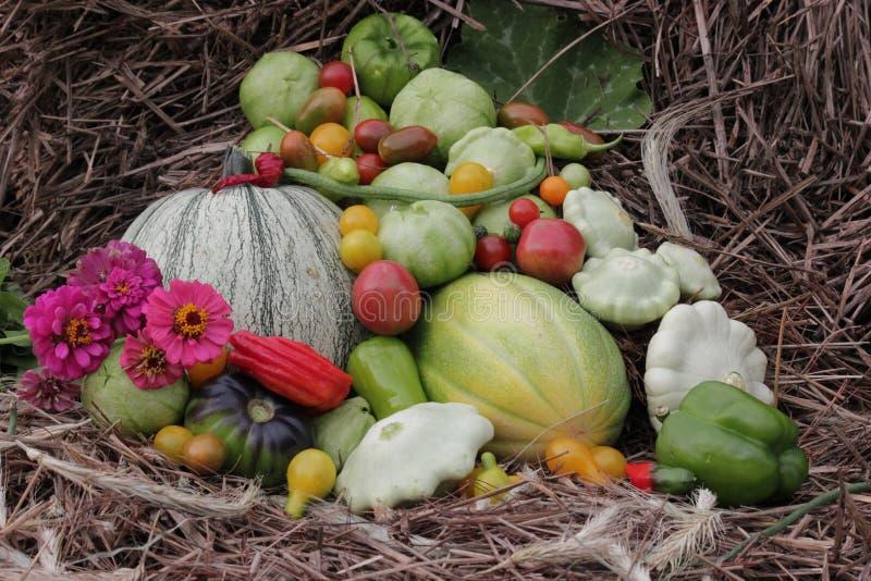 Abbondanza di verdure dal giardino su fieno fotografie stock libere da diritti