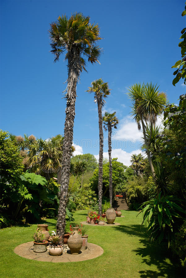Abbottbury tropiska trädgårdar Dorset UK royaltyfria foton