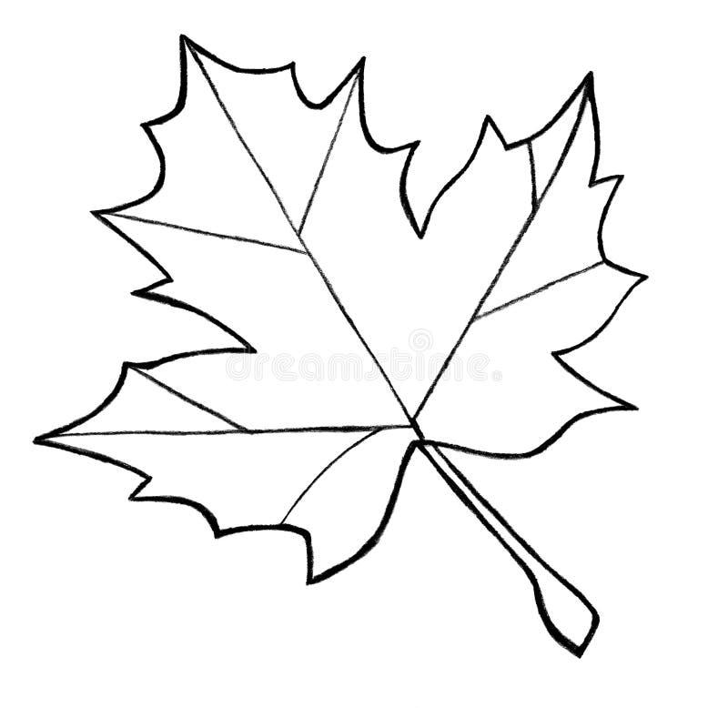 Abbozzo della foglia di acero illustrazione di stock - Foglia canadese contorno foglia canadese ...