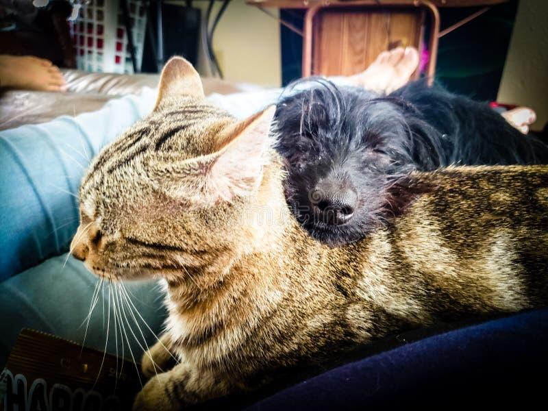 Abbracci dell'animale domestico fotografia stock libera da diritti