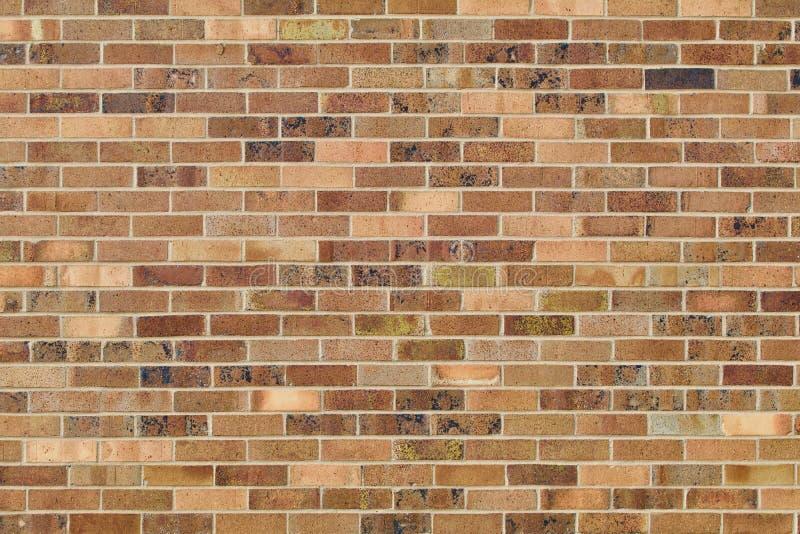 Abbronzatura multicolore e fondo marrone del muro di mattoni immagine stock libera da diritti