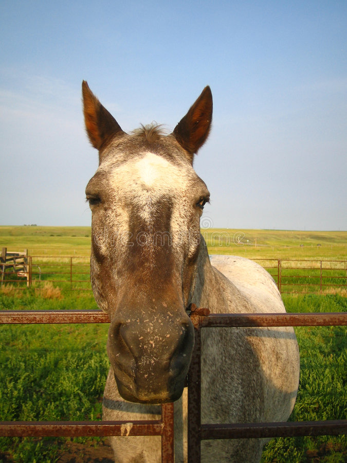 Download Abby the Horse stock photo. Image of head, meadow, buddy - 313886