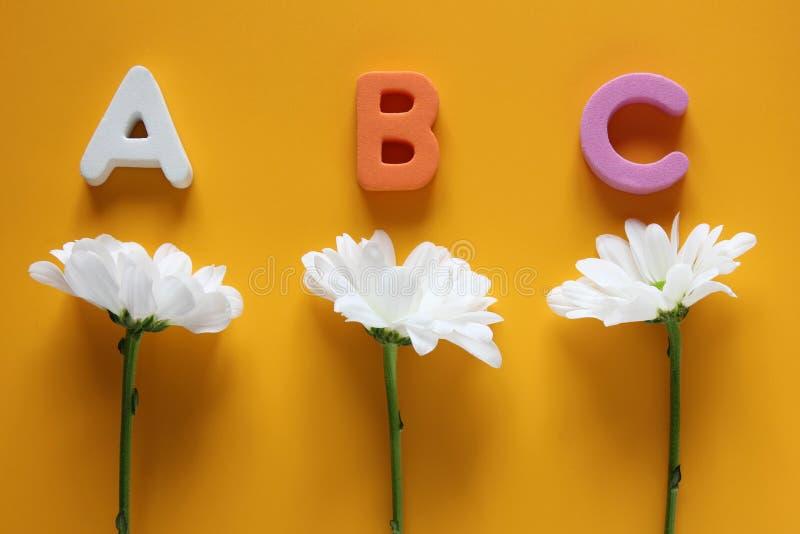 ABC - As primeiras letras do alfabeto inglês e de três crisântemos brancos De volta ? escola imagem de stock royalty free