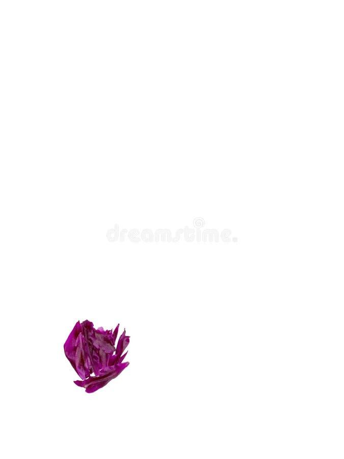 ABC, het alfabet van rode, donkere roze en groene bloembloemblaadjes alfabet van bloemblaadjes van pioenen royalty-vrije stock foto's