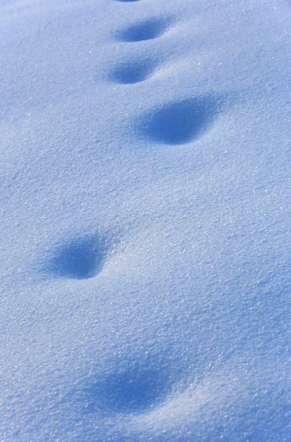 Abdrücke auf blauer Schneeoberfläche lizenzfreies stockbild